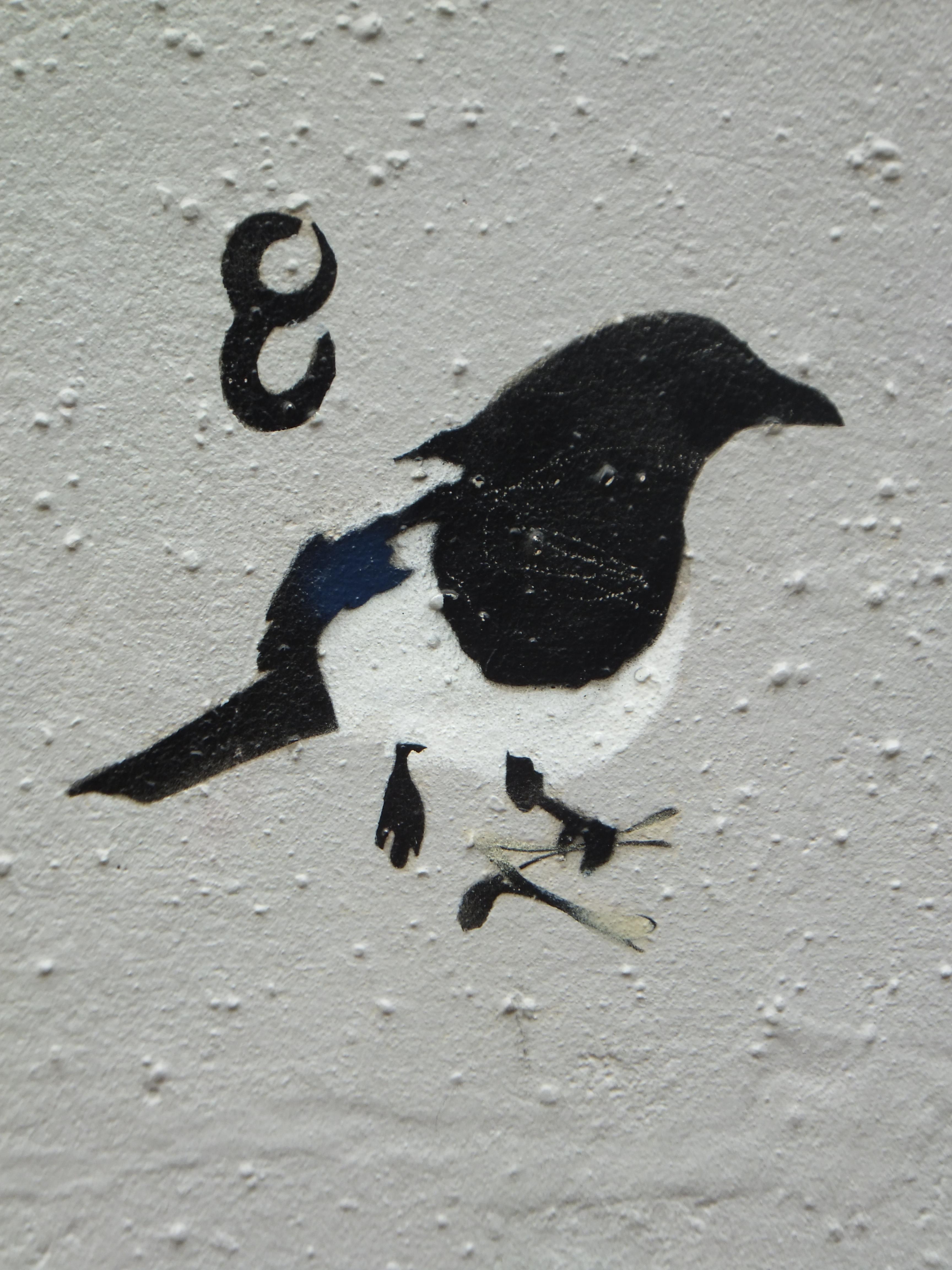μεγάλο μαύρο πουλί κερατάς